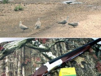 How To Chose A Dove Gun