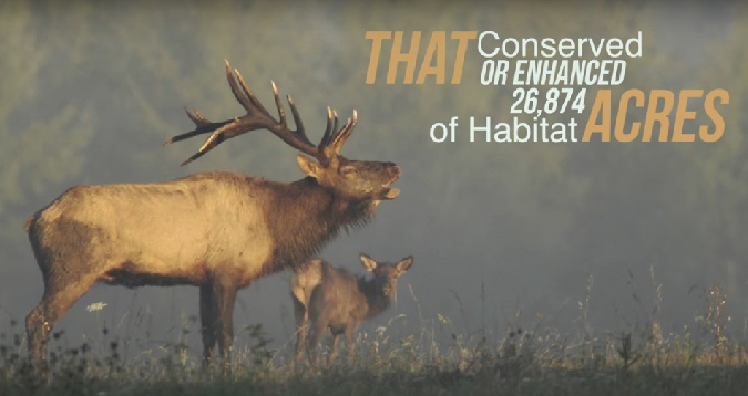 More Elk Country Conserved, Opened to Public Access in Pennsylvania