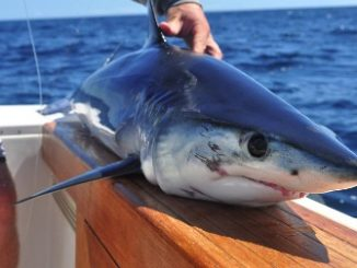 Shark Fishing Tips From Out Friends In New York
