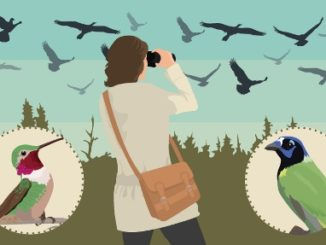 Migrating to Birding Locations This Year 2