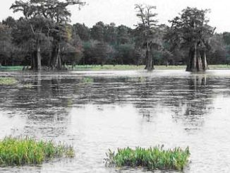 BHA Wades into Legal Fight over Access to Famed Catahoula Lake in Louisiana