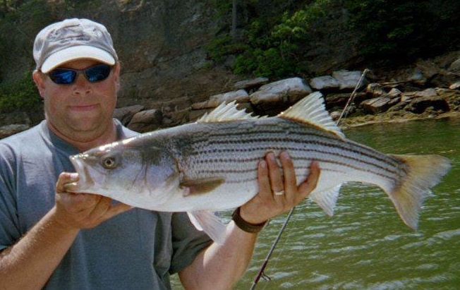 Massachusetts mismanages the wild striped bass fishery
