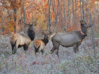 RMEF Supports Inaugural Wisconsin Elk Hunt