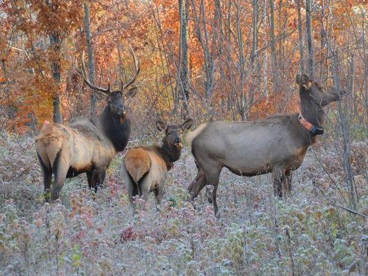 RMEF Supports Inaugural Wisconsin Elk Hunt