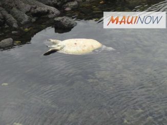 Hawaii Sea Turtle Killing leads to Arrest