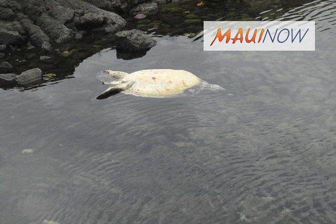 Hawaii Sea Turtle Killing leads to Arrest