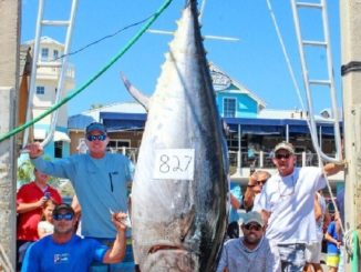 FWC approves new Florida Saltwater Fishing Records