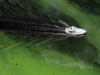 Governor Scott Issues State of Emergency for Algae Blooms