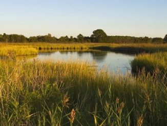 Bill to Help Enhance Fish Habitat Conservation