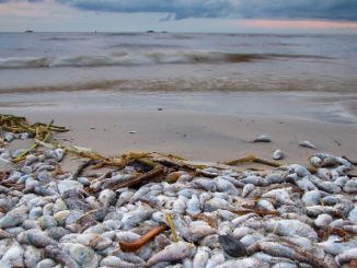 Florida's Governor Directs $3 Million to Reduce Red Tide