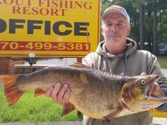 Record Cutthroat from White River In Arkansas