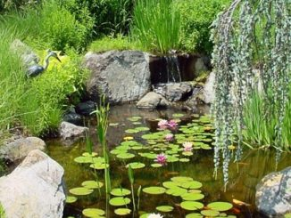 Pond Owners Need To Know