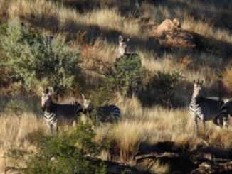 The Benefits Of Conservation Hunting And Venison In Namibia 1