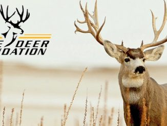 Mule Deer Foundation Receives National Fish and Wildlife Foundation Grant