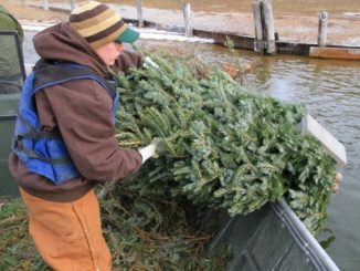 Put Christmas Trees to Good Use By Recycling as Fishing Reefs
