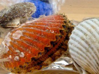 Sarasota Bay Watch Stocks Shellfish to Cut Harmful Algae Blooms