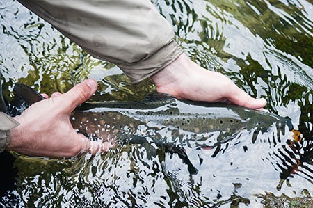 Trout Fishing Tips From Minnesota   OutDoors Unlimited Media