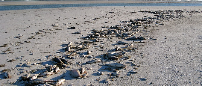 Florida- Red Tide Continues To Vanish From State Beaches