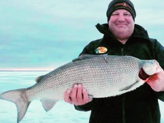 A New Minnesota State Record Whitefish, Maybe