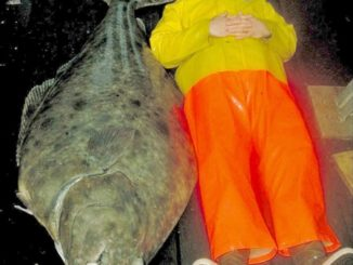 7 Reasons Why Size Matters for Halibut