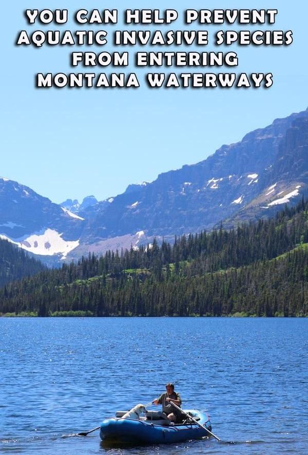 Help Prevent Spread of Invasive Species In Montana