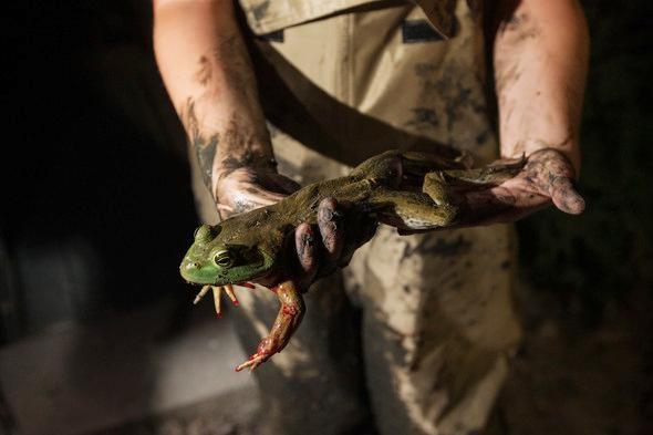 Missouri frogging season begins