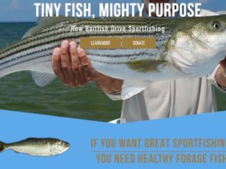 Sportfishing Groups Call for Science-Based Management of Gulf Menhaden