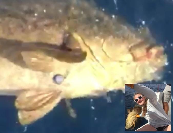 200-pound grouper