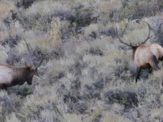 Nevada Elk Country, Hunting Heritage Receive $616,000 in Grants