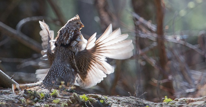 Avoid These 14 Mistakes to Collect More Grouse